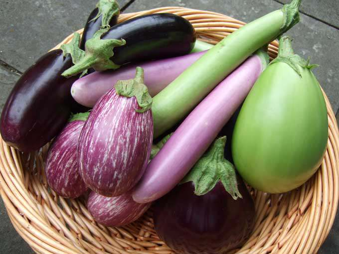 All-types-of-Brinjal.jpg